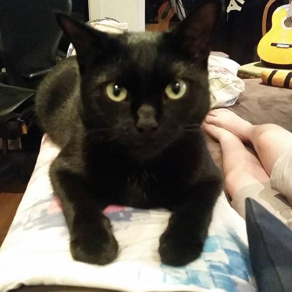 Panther esmethecat