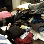 There's two cats in them there (sorted) washing stacks.